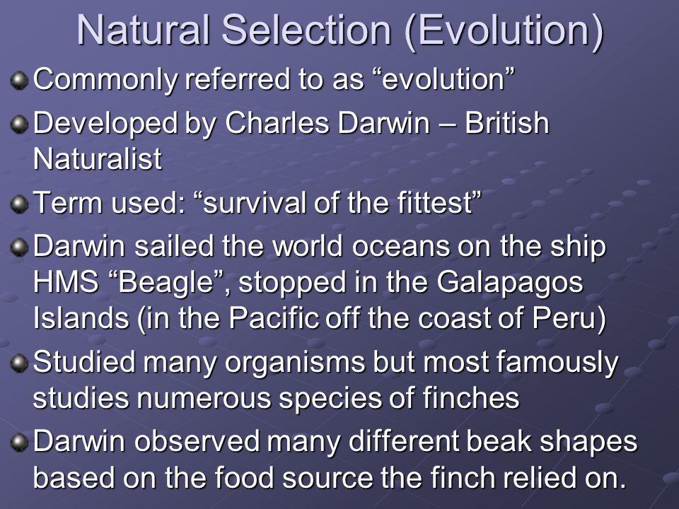 Natural Selection (Evolution)