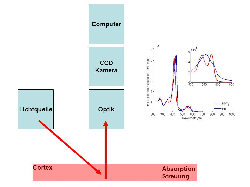 Computer CCD Kamera Lichtquelle Optik Cortex Absorption Streuung
