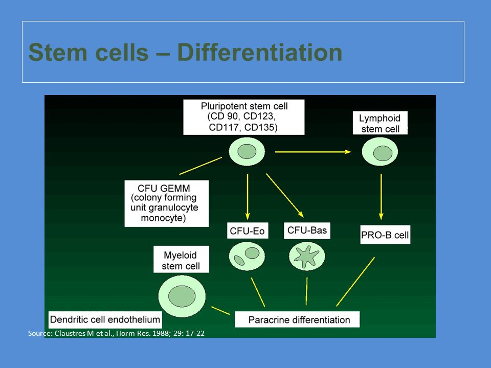 Stem cells – Differentiation