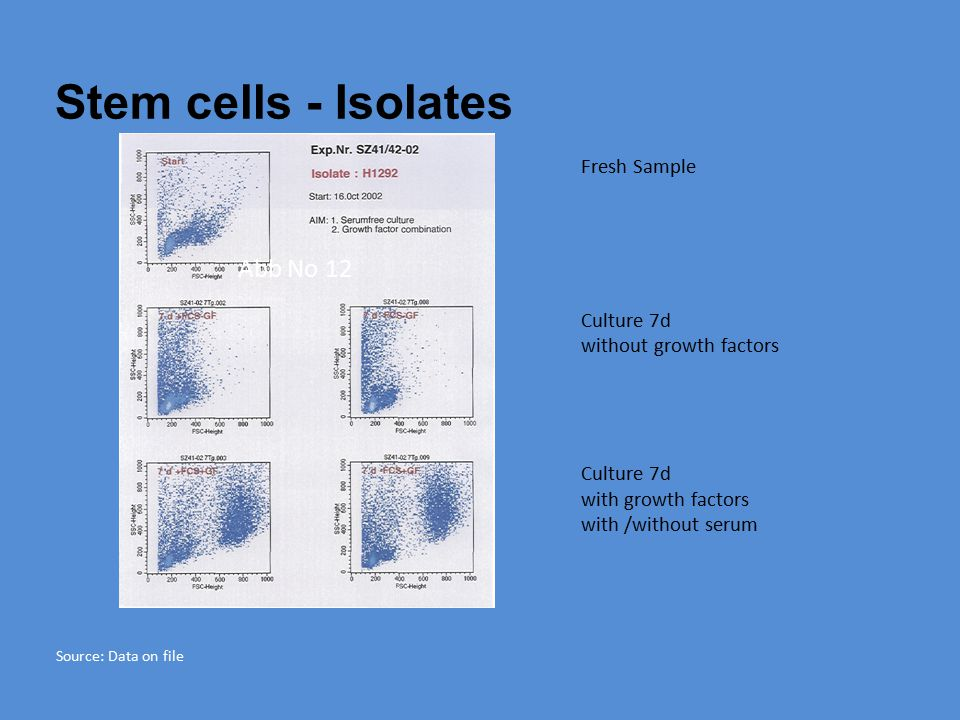 Stem cells - Isolates Abb No 12 Fresh Sample Culture 7d