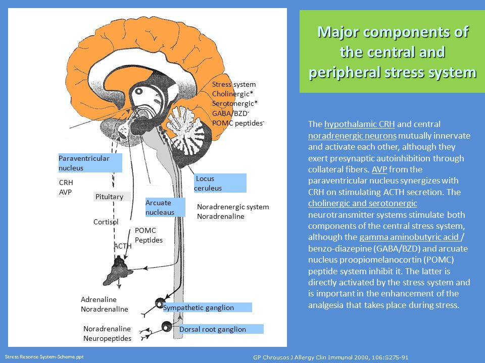 Major components of the central and peripheral stress system