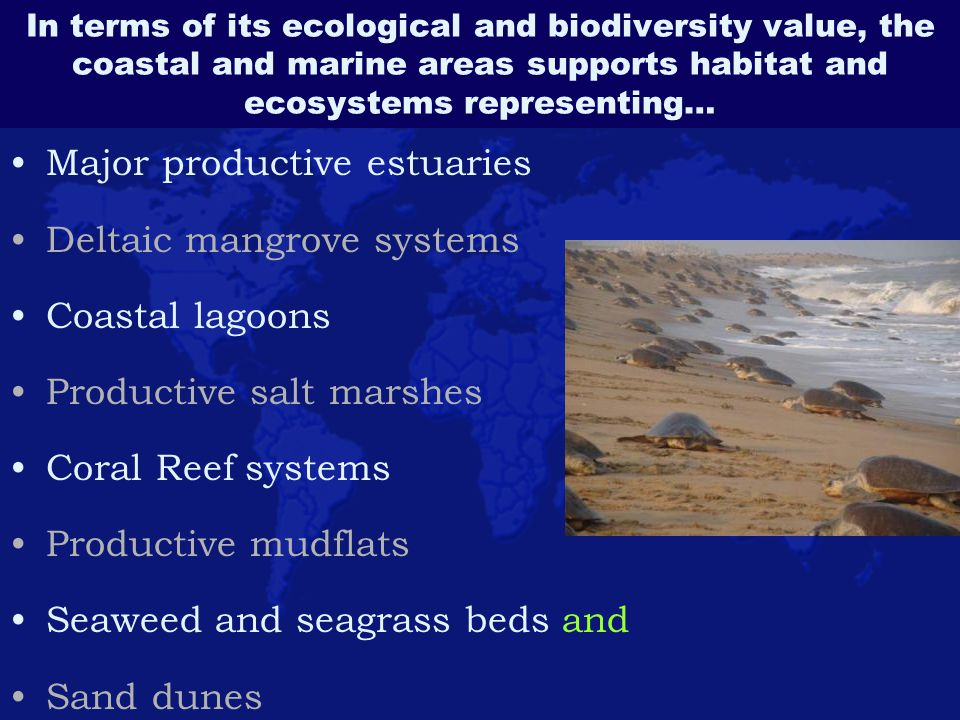 Major productive estuaries Deltaic mangrove systems Coastal lagoons