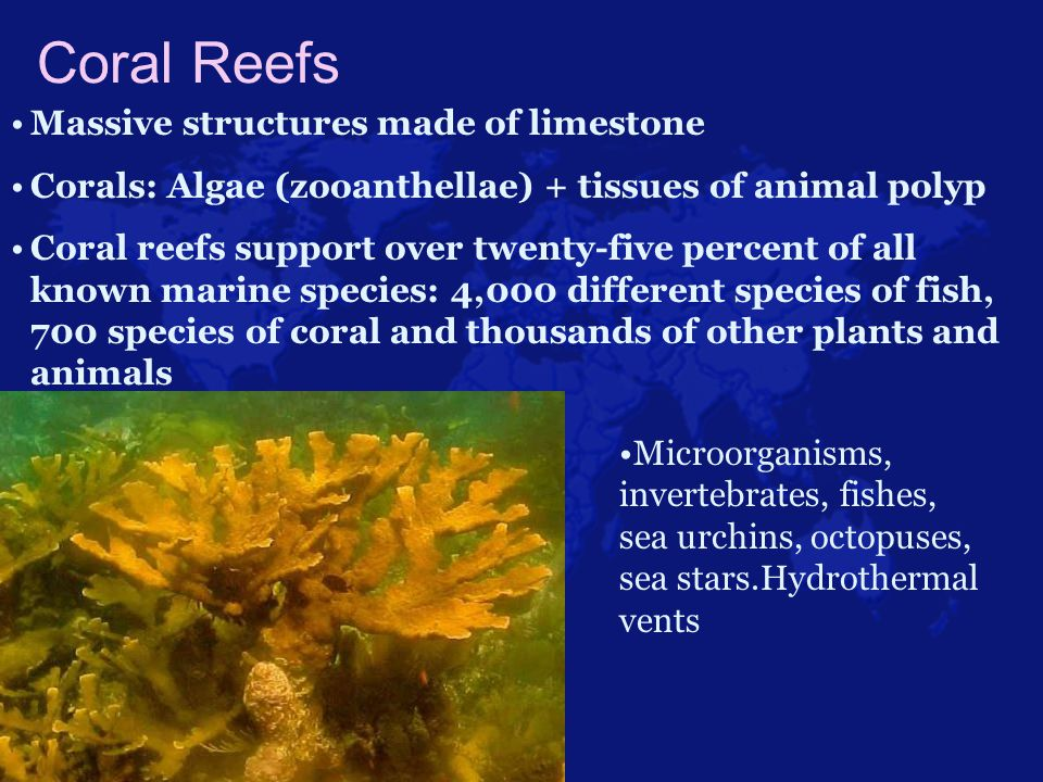 Coral Reefs Massive structures made of limestone