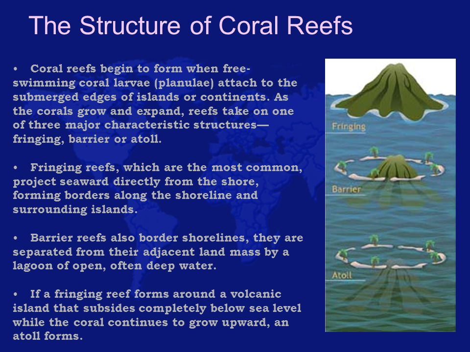 The Structure of Coral Reefs