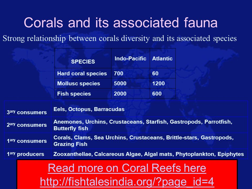 Corals and its associated fauna