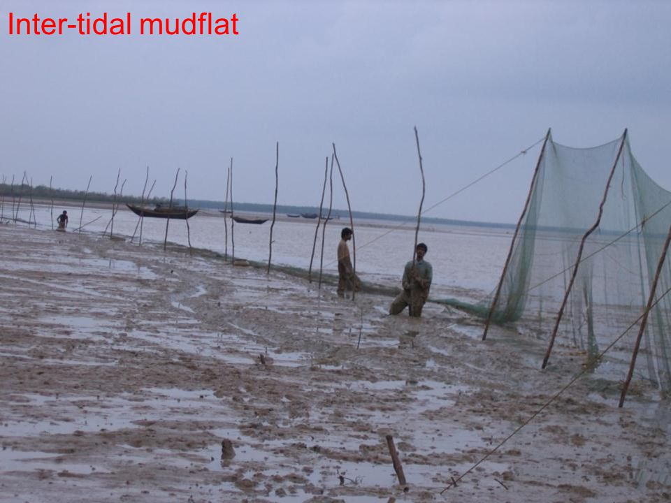 Estuaries Inter-tidal mudflat
