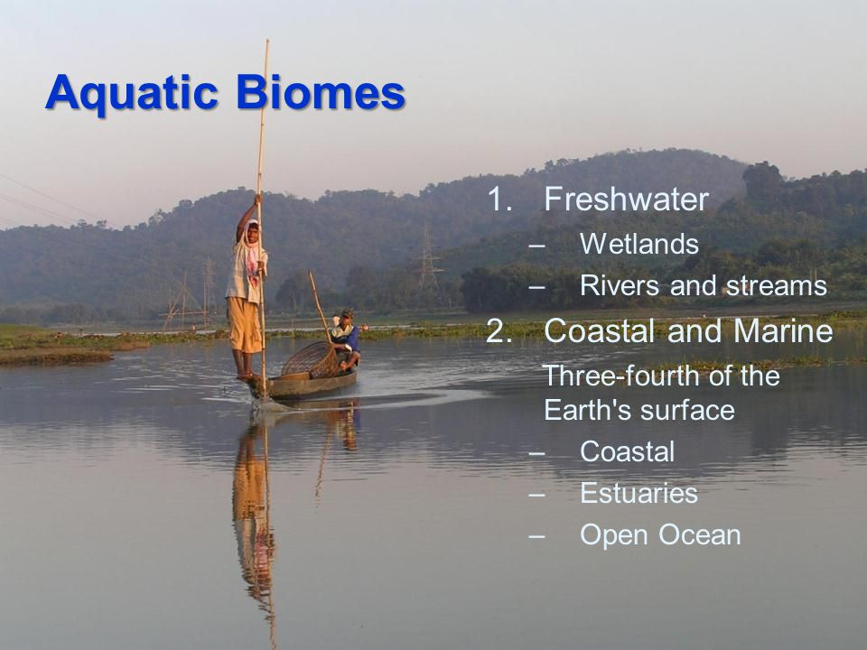Aquatic Biomes Freshwater Coastal and Marine Wetlands