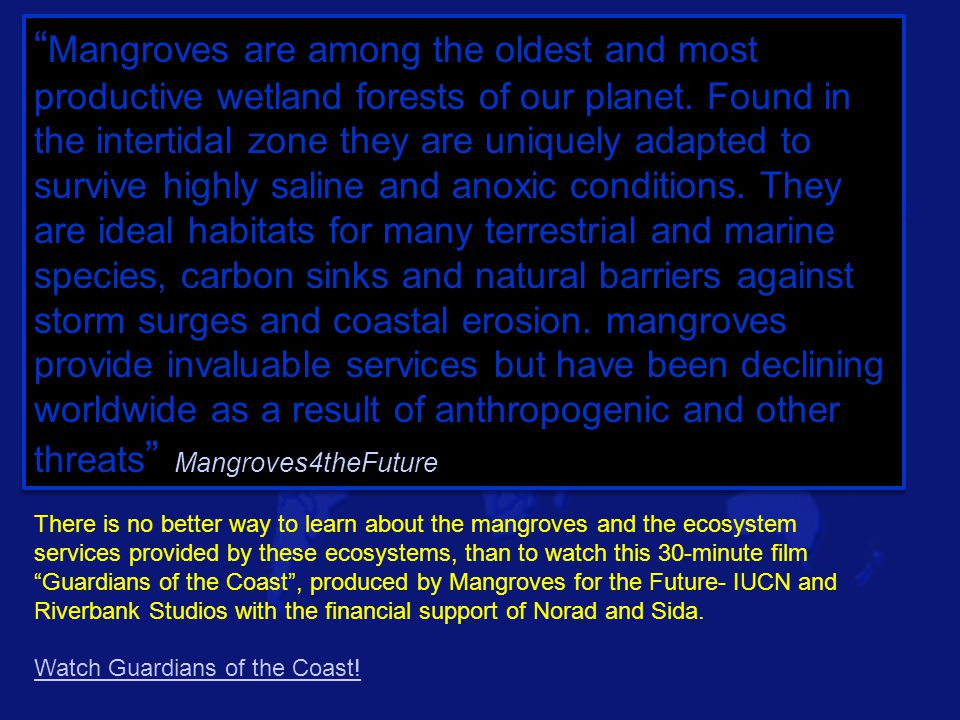 Mangroves are among the oldest and most productive wetland forests of our planet. Found in the intertidal zone they are uniquely adapted to survive highly saline and anoxic conditions. They are ideal habitats for many terrestrial and marine species, carbon sinks and natural barriers against storm surges and coastal erosion. mangroves provide invaluable services but have been declining worldwide as a result of anthropogenic and other threats Mangroves4theFuture