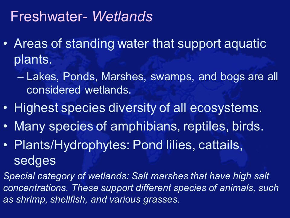 Freshwater- Wetlands Areas of standing water that support aquatic plants. Lakes, Ponds, Marshes, swamps, and bogs are all considered wetlands.