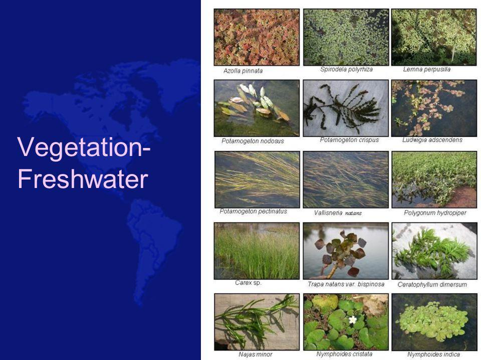 Vegetation- Freshwater