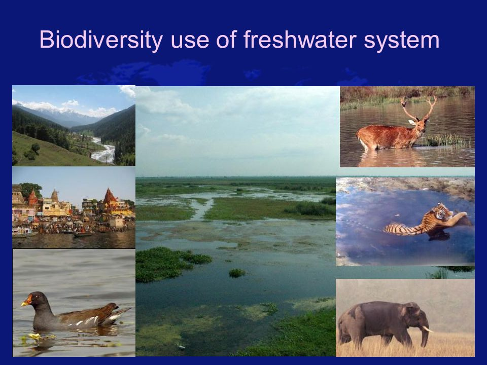 Biodiversity use of freshwater system