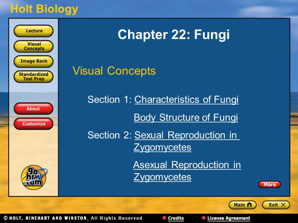 Chapter 22: Fungi Visual Concepts Section 1: Characteristics of Fungi