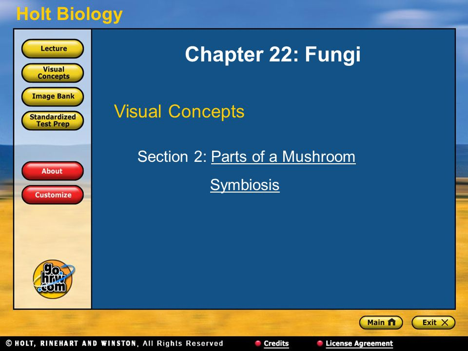 Chapter 22: Fungi Visual Concepts Section 2: Parts of a Mushroom