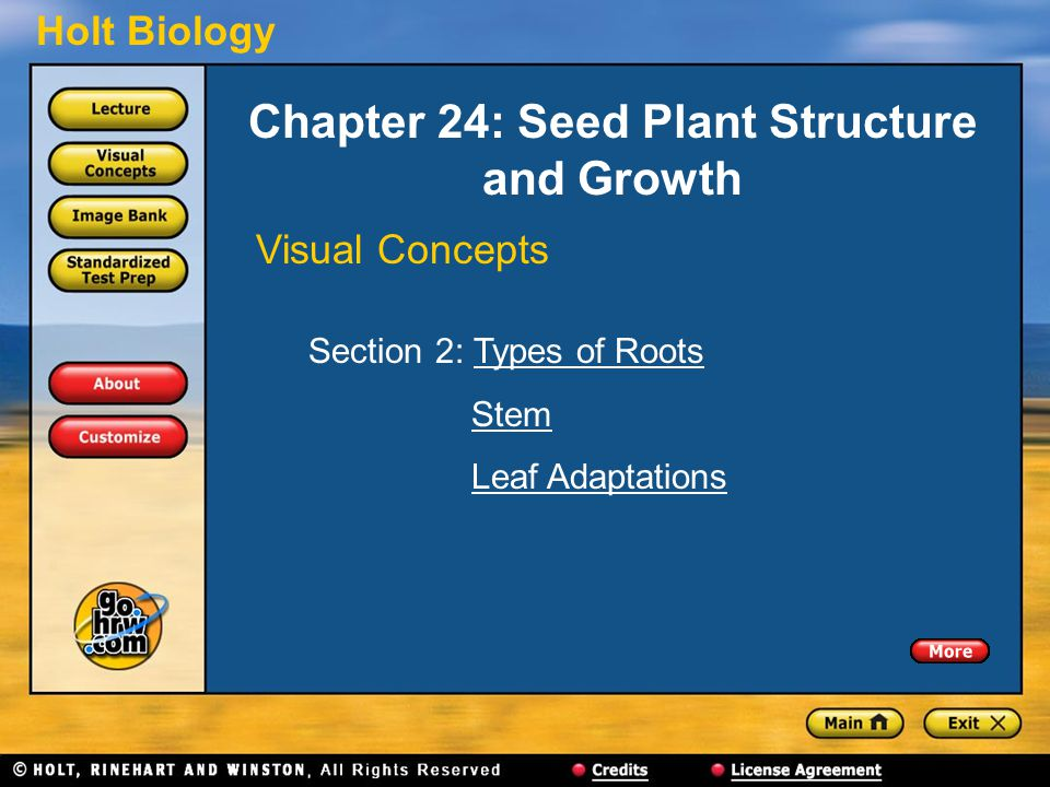 Chapter 24: Seed Plant Structure and Growth