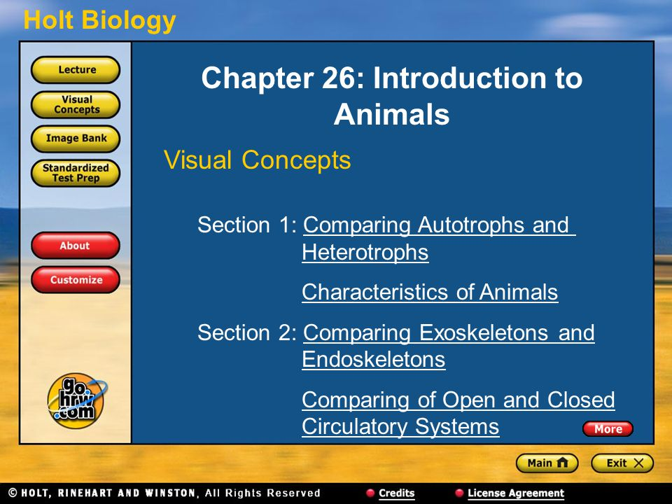 Chapter 26: Introduction to Animals