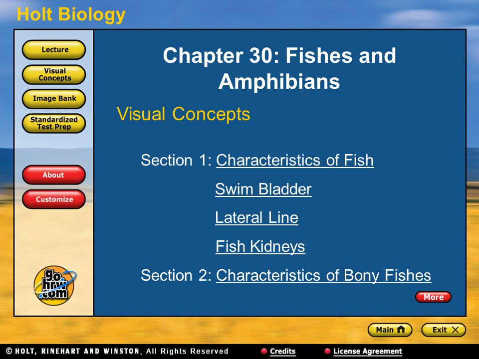 Chapter 30: Fishes and Amphibians