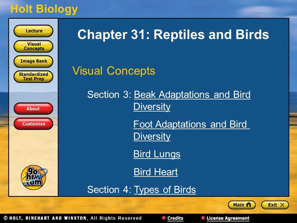 Chapter 31: Reptiles and Birds