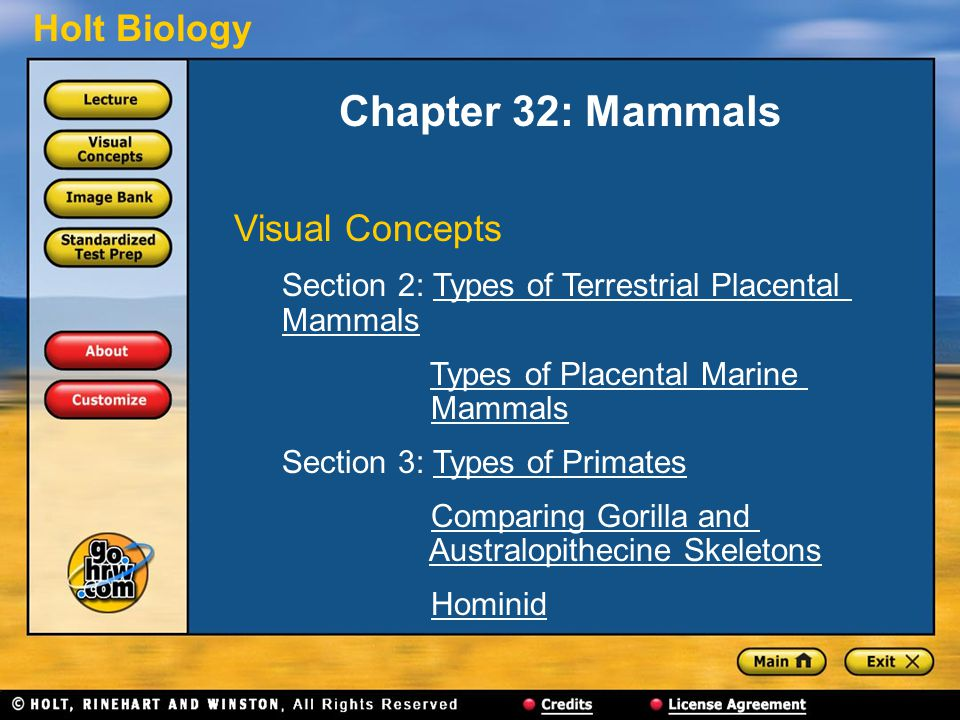 Chapter 32: Mammals Visual Concepts