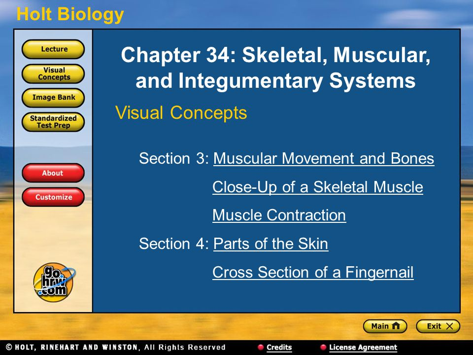 Chapter 34: Skeletal, Muscular, and Integumentary Systems