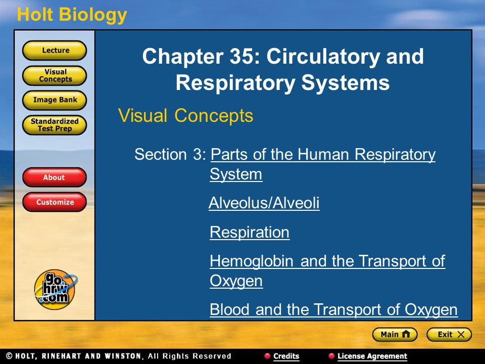 Chapter 35: Circulatory and Respiratory Systems
