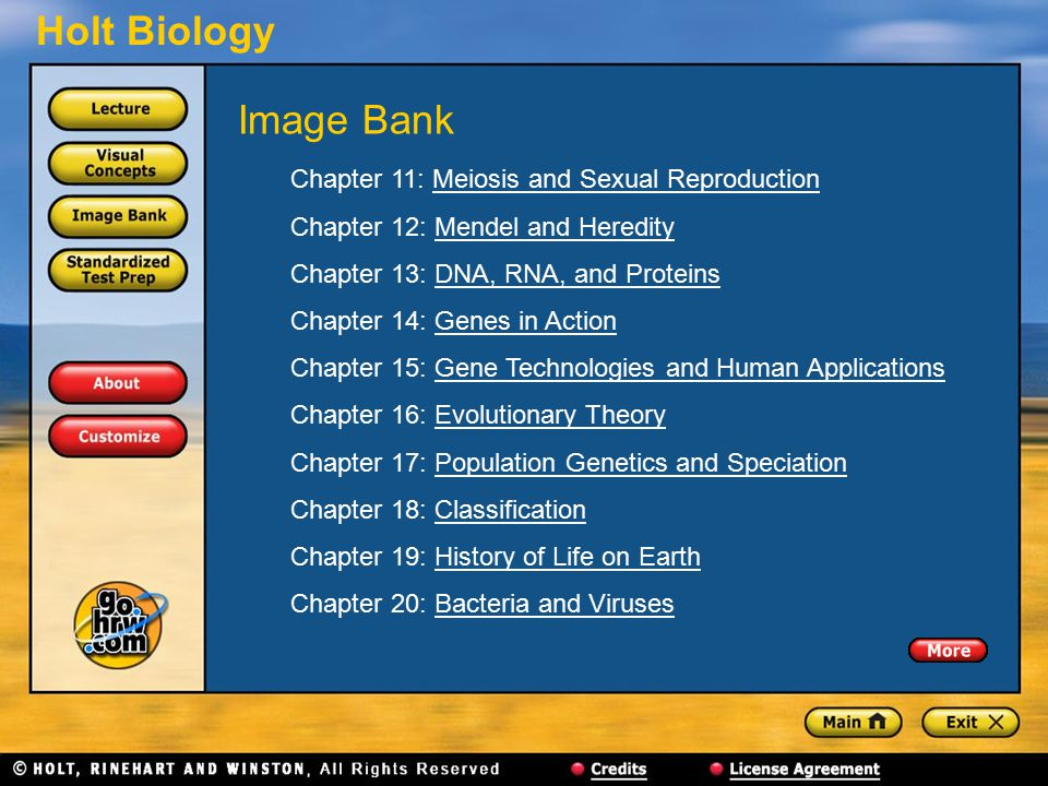 Image Bank Chapter 11: Meiosis and Sexual Reproduction