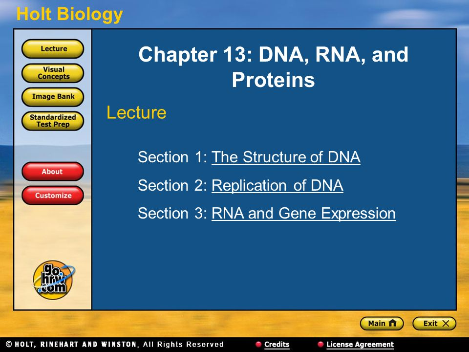Chapter 13: DNA, RNA, and Proteins
