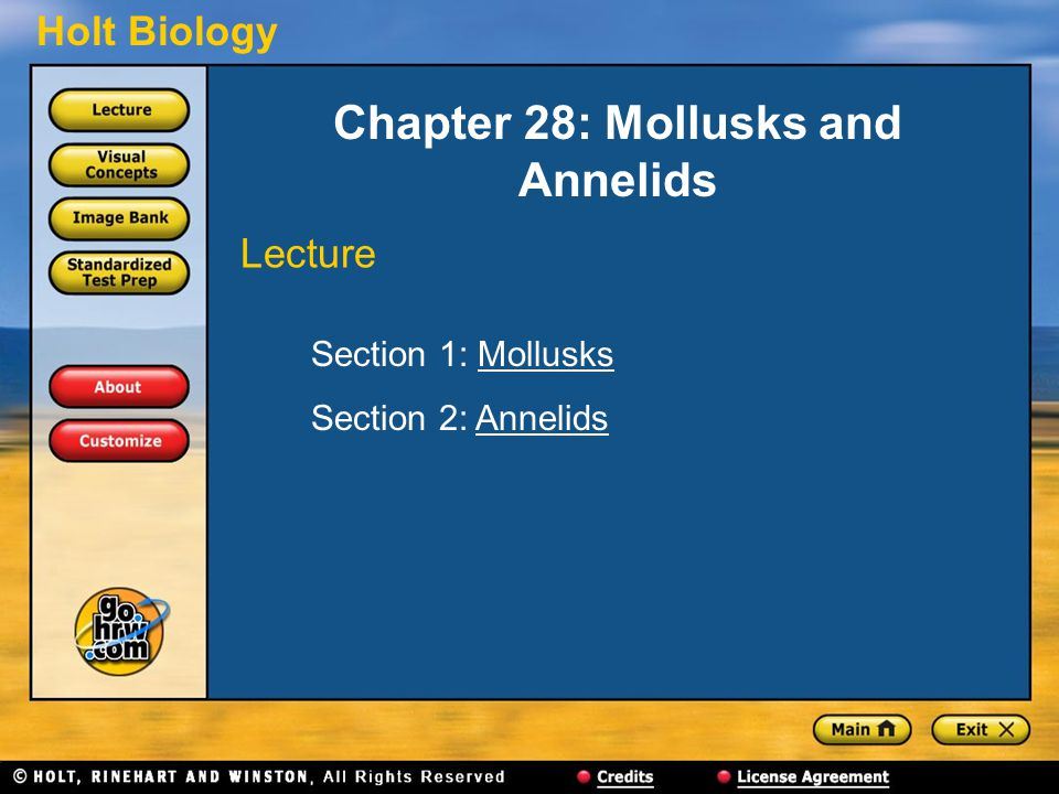 Chapter 28: Mollusks and Annelids