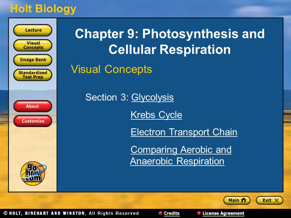 Chapter 9: Photosynthesis and Cellular Respiration