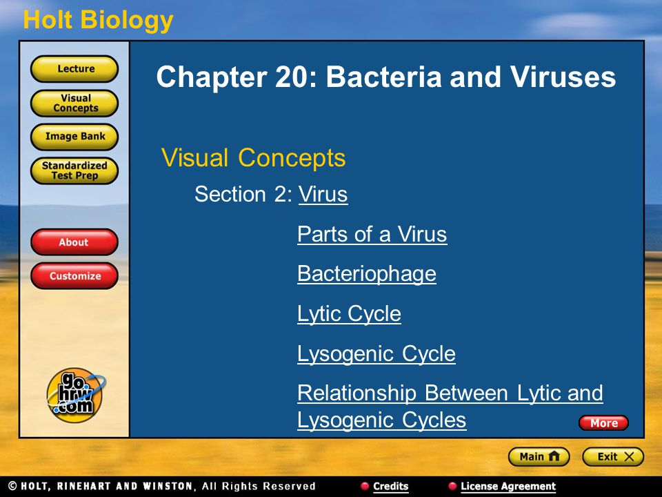 Chapter 20: Bacteria and Viruses