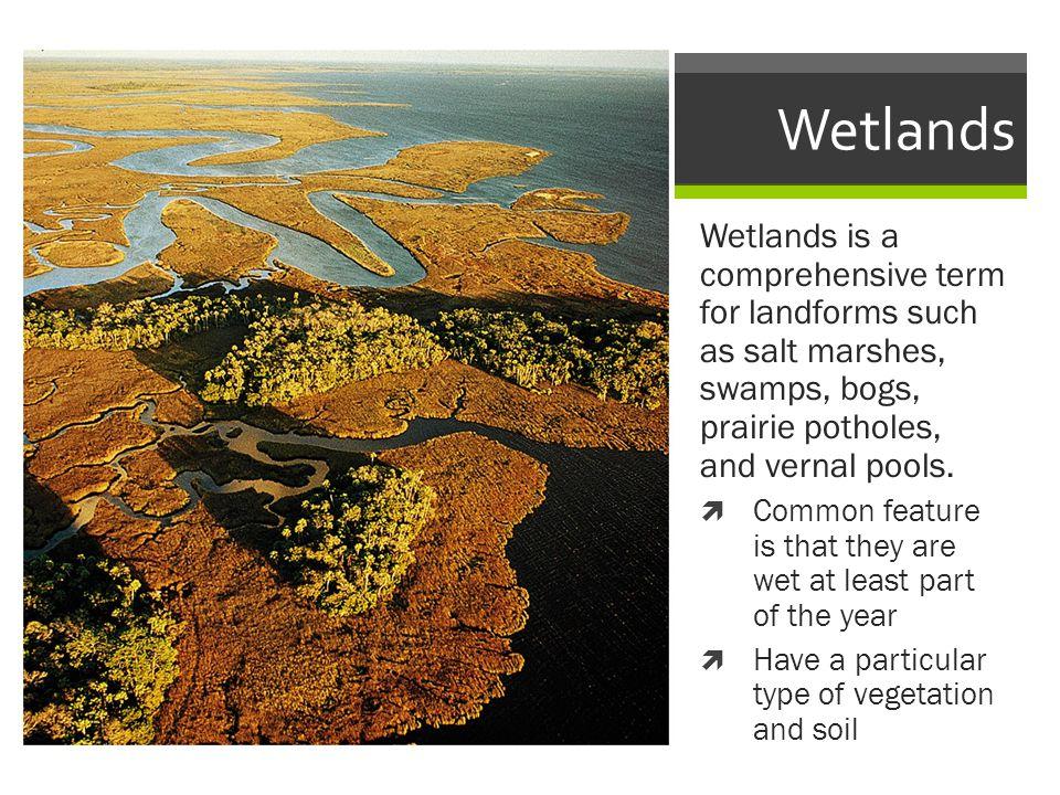 Wetlands Wetlands is a comprehensive term for landforms such as salt marshes, swamps, bogs, prairie potholes, and vernal pools.