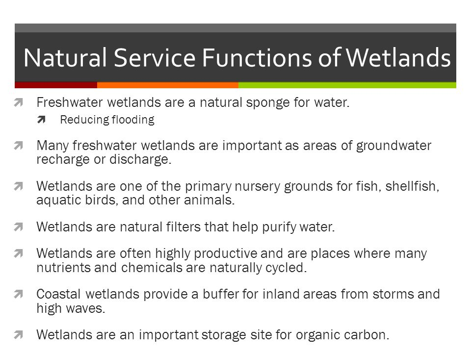 Natural Service Functions of Wetlands