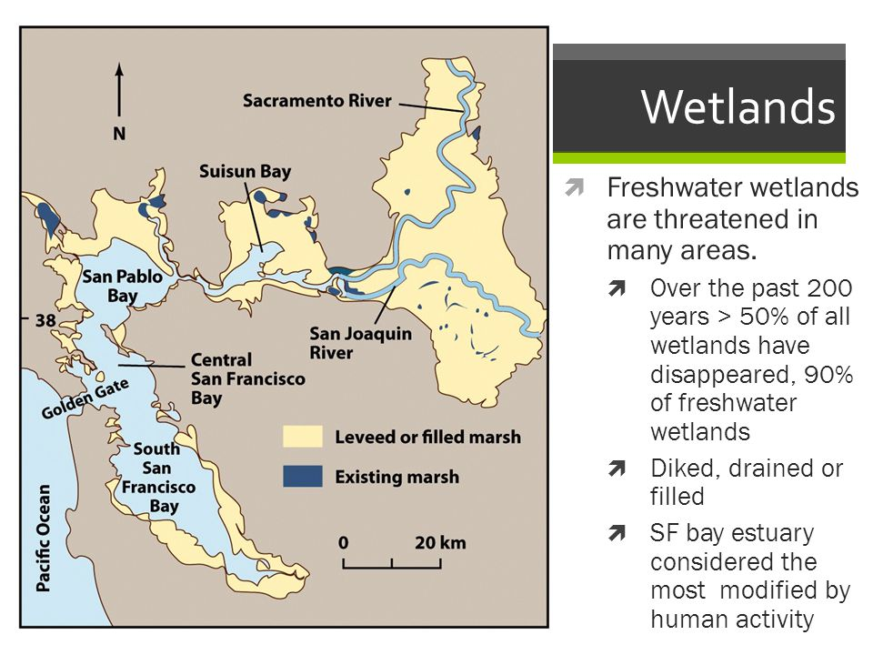 Wetlands Freshwater wetlands are threatened in many areas.