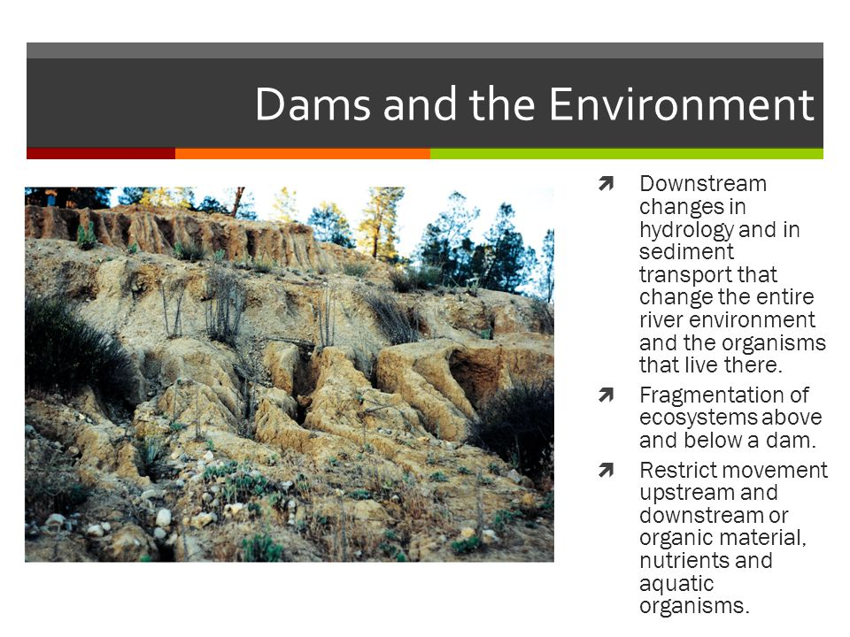 Dams and the Environment