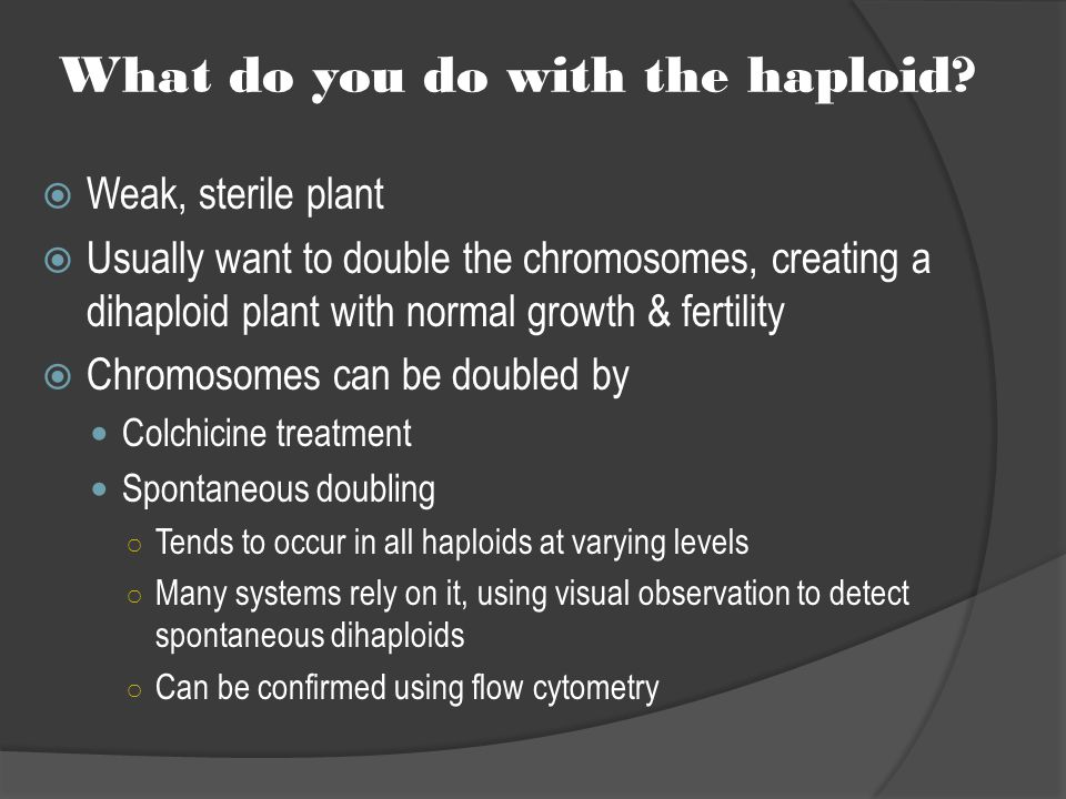 What do you do with the haploid