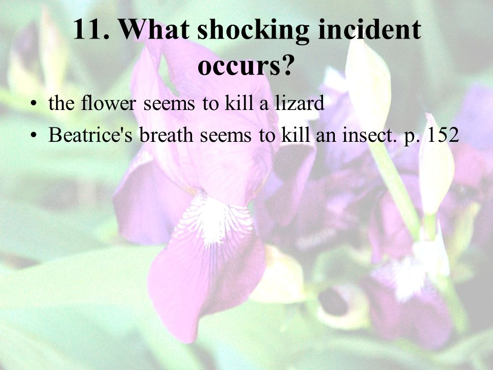 11. What shocking incident occurs