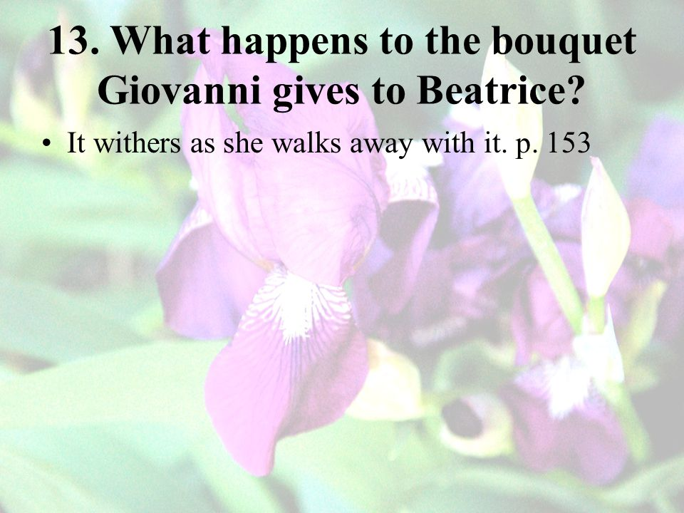 13. What happens to the bouquet Giovanni gives to Beatrice