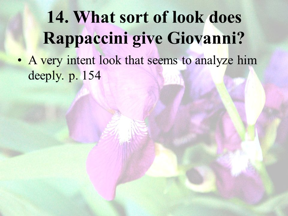 14. What sort of look does Rappaccini give Giovanni