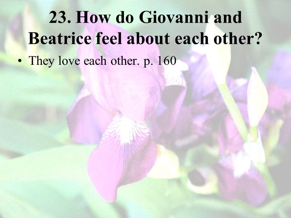 23. How do Giovanni and Beatrice feel about each other