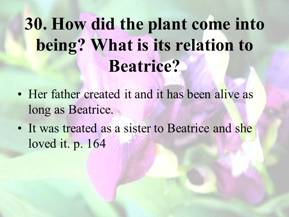 30. How did the plant come into being What is its relation to Beatrice