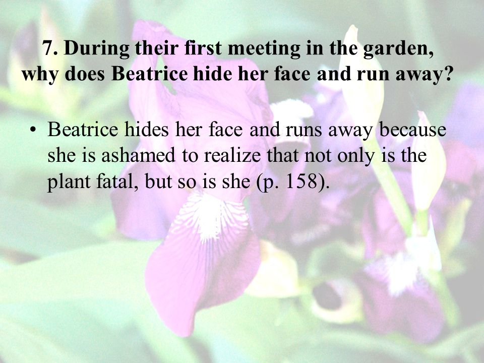 7. During their first meeting in the garden, why does Beatrice hide her face and run away