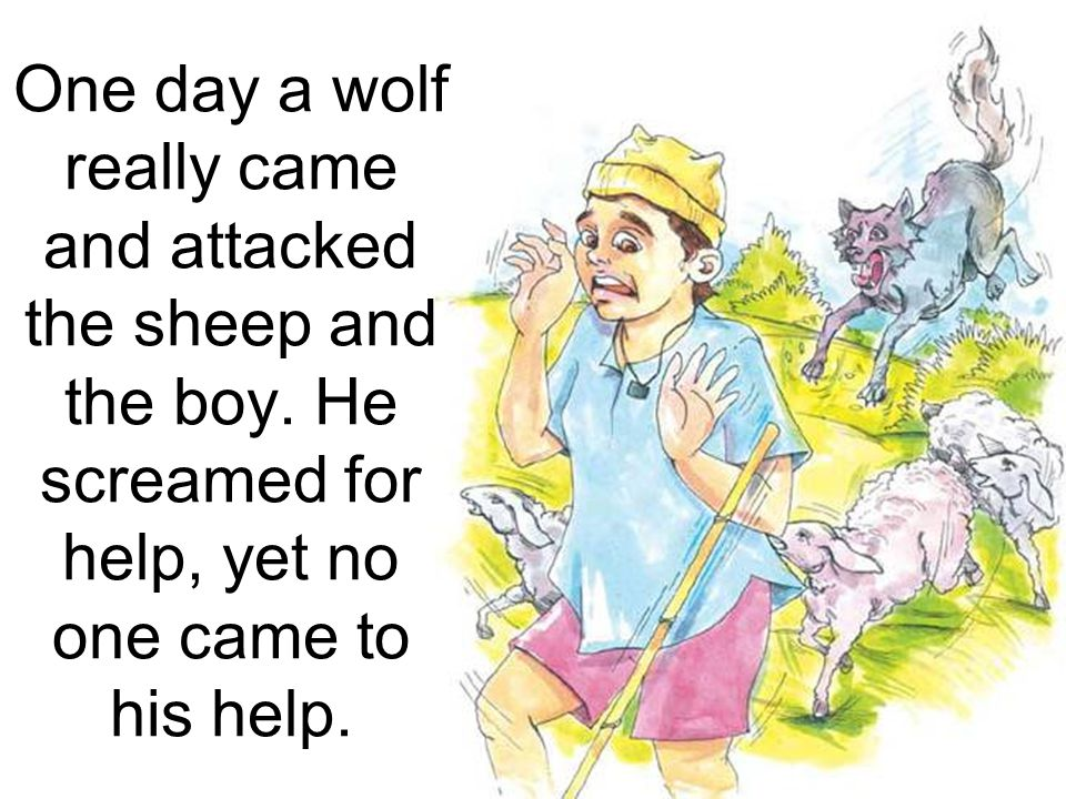 One day a wolf really came and attacked the sheep and the boy
