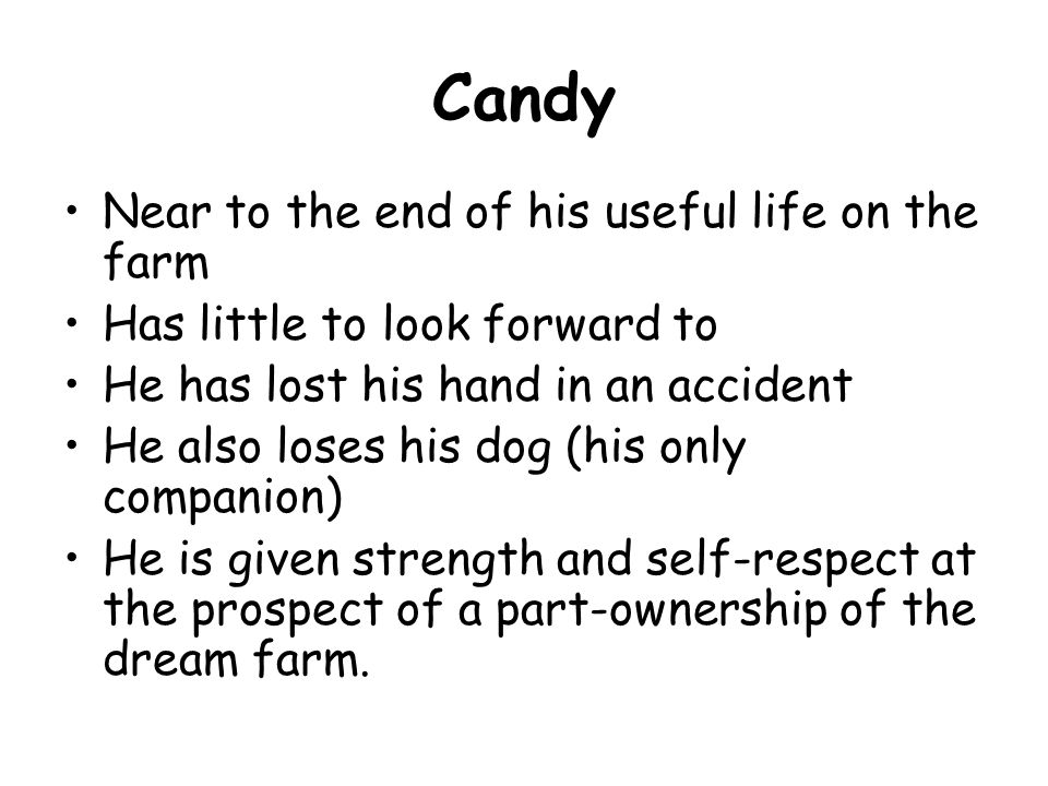 Candy Near to the end of his useful life on the farm