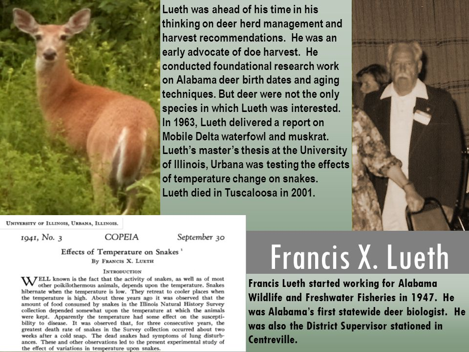 Lueth was ahead of his time in his thinking on deer herd management and harvest recommendations. He was an early advocate of doe harvest. He conducted foundational research work on Alabama deer birth dates and aging techniques. But deer were not the only species in which Lueth was interested. In 1963, Lueth delivered a report on Mobile Delta waterfowl and muskrat. Lueth's master's thesis at the University of Illinois, Urbana was testing the effects of temperature change on snakes.