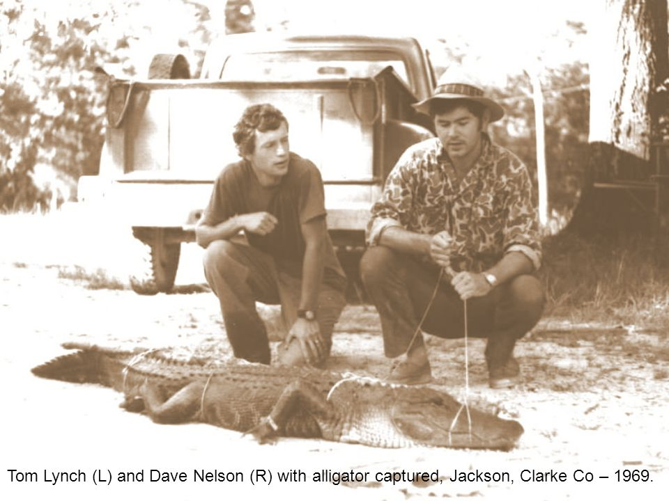 Tom Lynch (L) and Dave Nelson (R) with alligator captured, Jackson, Clarke Co – 1969.