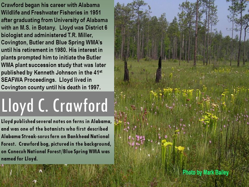 Crawford began his career with Alabama Wildlife and Freshwater Fisheries in 1951 after graduating from University of Alabama with an M.S. in Botany. Lloyd was District 6 biologist and administered T.R. Miller, Covington, Butler and Blue Spring WMA's until his retirement in 1980. His interest in plants prompted him to initiate the Butler WMA plant succession study that was later published by Kenneth Johnson in the 41st SEAFWA Proceedings. Lloyd lived in Covington county until his death in 1997.