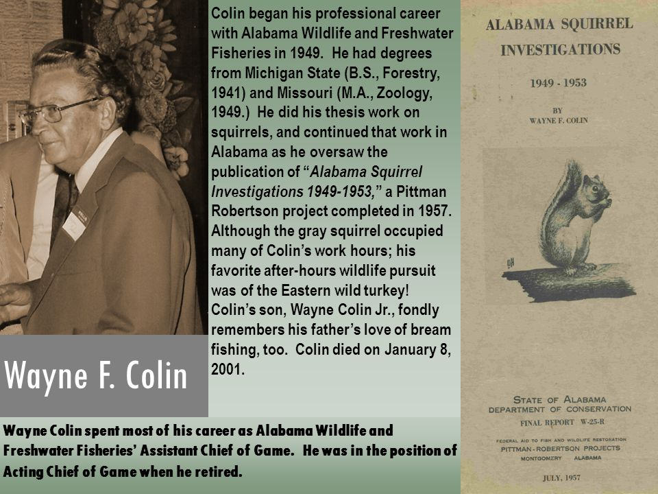 Colin began his professional career with Alabama Wildlife and Freshwater Fisheries in 1949. He had degrees from Michigan State (B.S., Forestry, 1941) and Missouri (M.A., Zoology, 1949.) He did his thesis work on squirrels, and continued that work in Alabama as he oversaw the publication of Alabama Squirrel Investigations 1949-1953, a Pittman Robertson project completed in 1957. Although the gray squirrel occupied many of Colin's work hours; his favorite after-hours wildlife pursuit was of the Eastern wild turkey! Colin's son, Wayne Colin Jr., fondly remembers his father's love of bream fishing, too. Colin died on January 8, 2001.