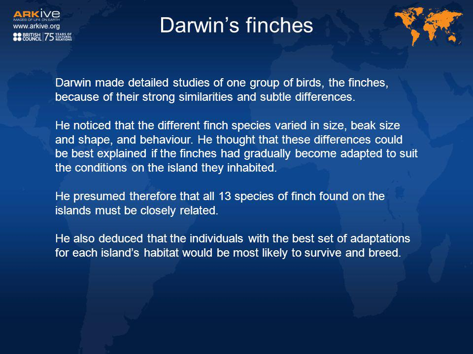 Darwin's finches Darwin made detailed studies of one group of birds, the finches, because of their strong similarities and subtle differences.