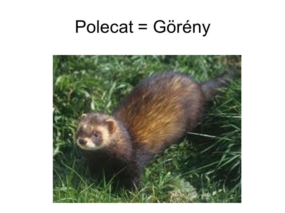 Polecat = Görény