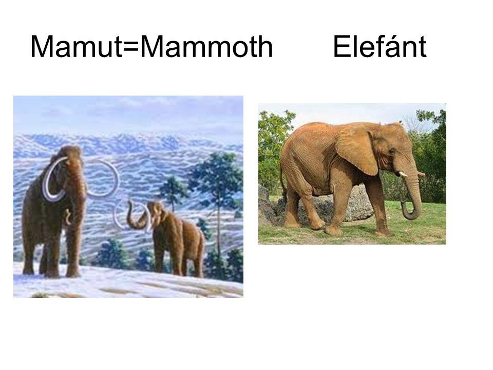 Mamut=Mammoth Elefánt