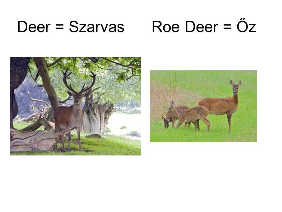 Deer = Szarvas Roe Deer = Őz